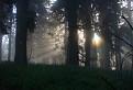 Lesná svätožiara