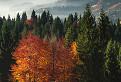 Farebná oravská jeseň