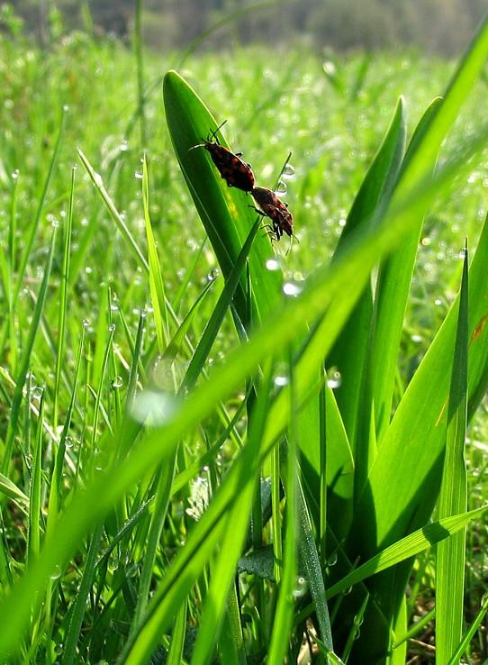 Hry v tráve
