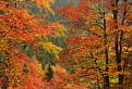 Jesenný detail