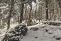 Pralesný zvyšok v Zbojníckej doline