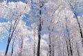 zmrznuté stromy na Javorovom vrchu