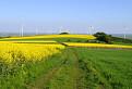 Žltozelená cesta