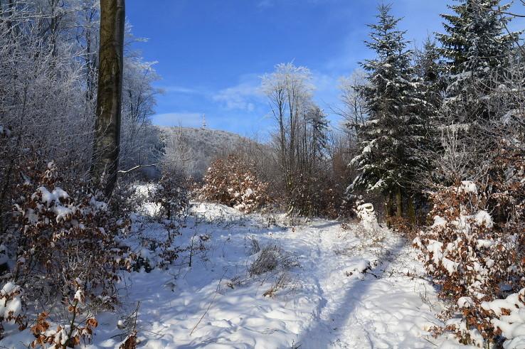Bardejovskými lesmi