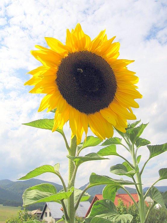Za slnkom