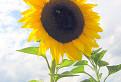 Za slnkom / 1.4444