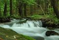 Vidlicový potok