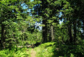 Nádherný les