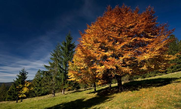 Ďalší jesenný strom II.
