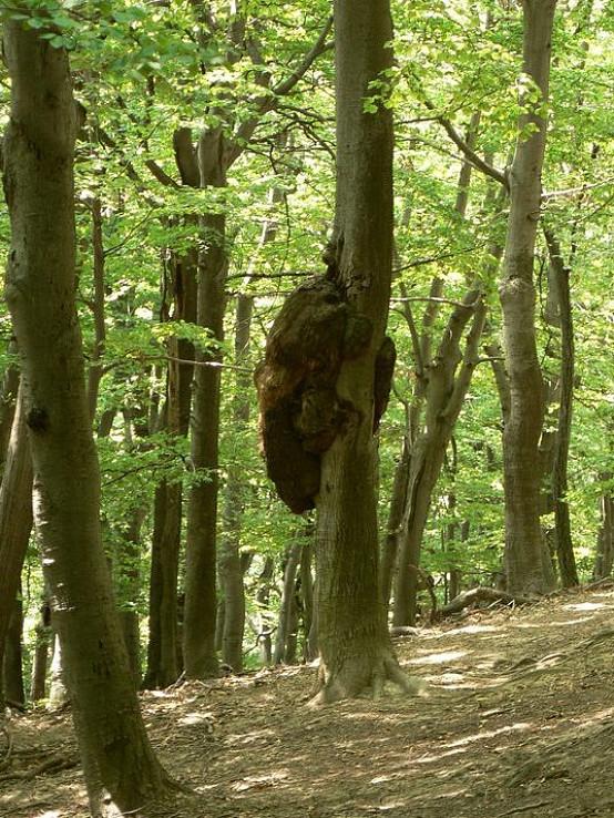 Chorý strom
