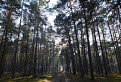 Na Silvestra v lese