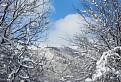 Les pod snehom