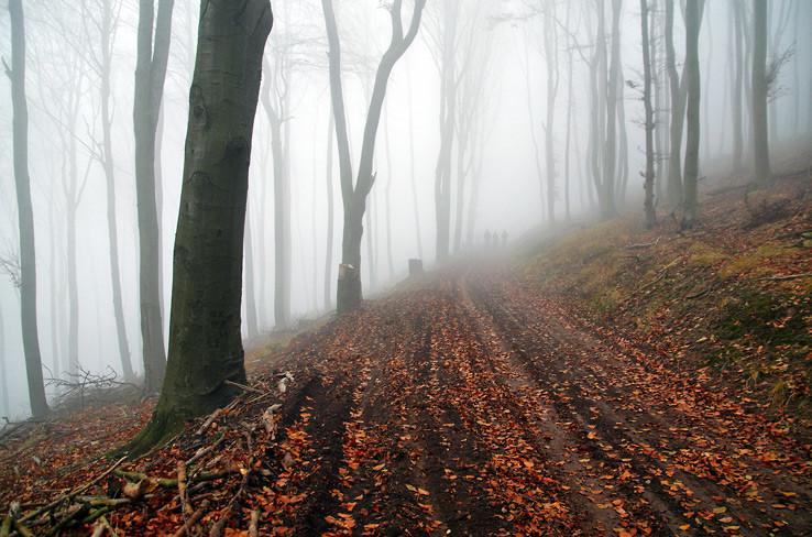 Tajomný les v Karpatoch III.