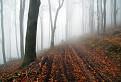 Tajomný les v Karpatoch III. / 1.0345