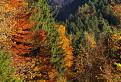 Cestou jesennou