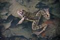 Žaba 2010