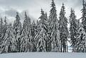 ...zimní les