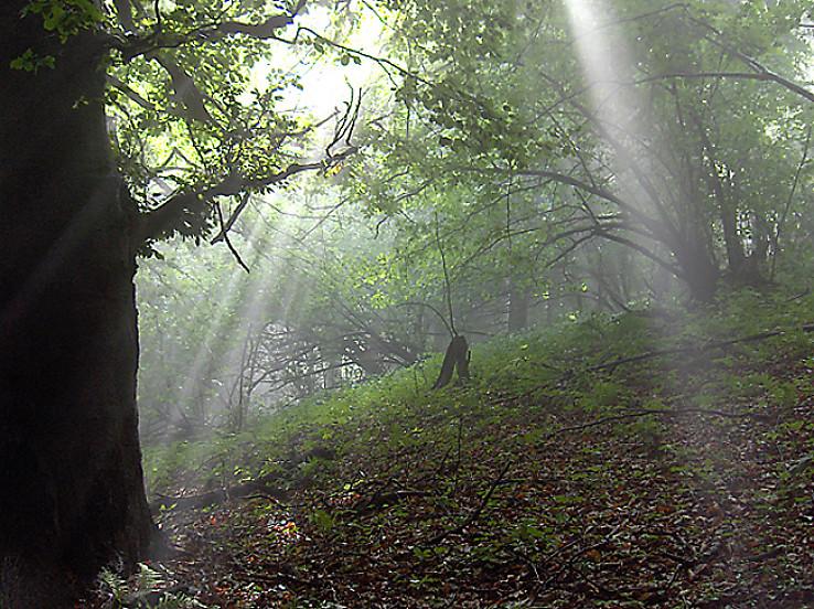 Lúče v lese nad Rematou