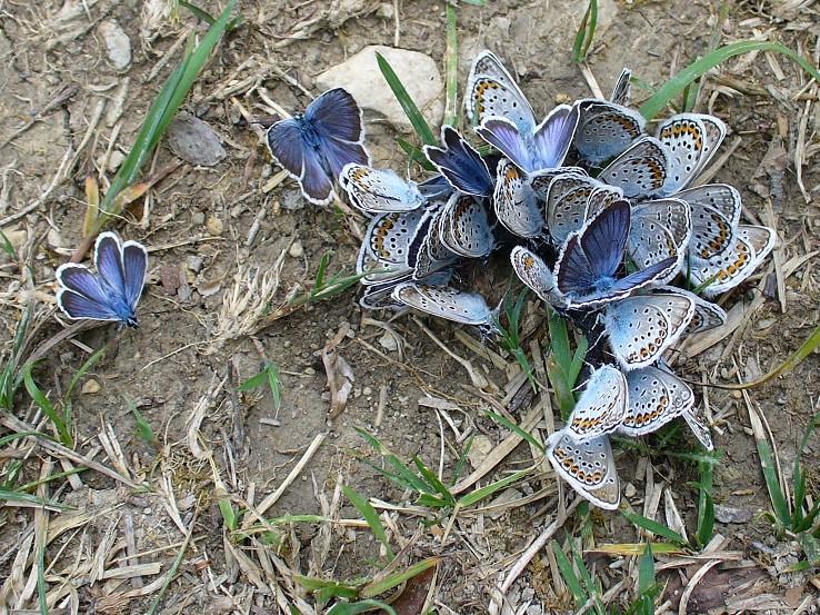Motýlia záhada