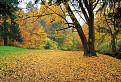 Jeseň pod zámkom