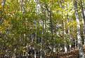 Skalné bralo uprostred jesenného lesa