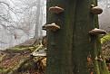 Karpatský prales / 1.0357