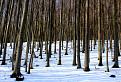 Zima v zápalkovej škatuľke. / 1.0714