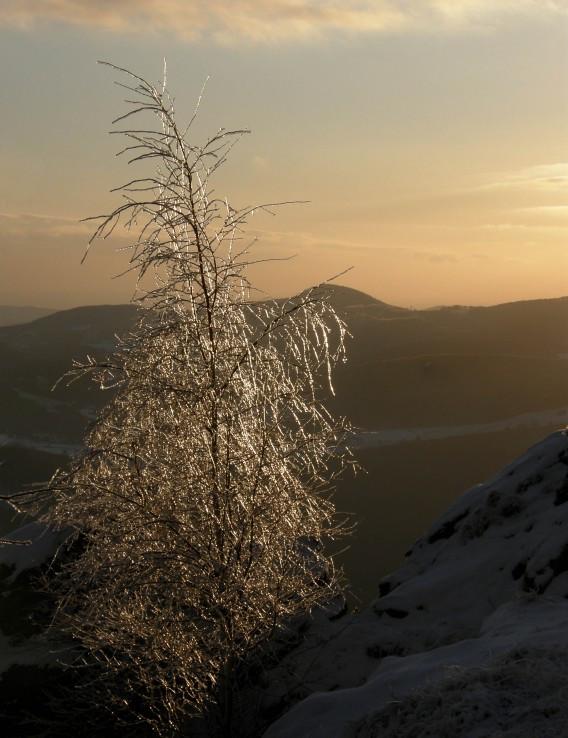 ľadový strom...