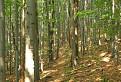 Bukový lesík
