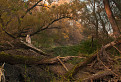 Na Dušičky v Dunajských lužných lesoch