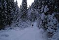 Zimná Medvedia cesta I.