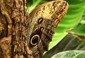 Motýľ / 1.0741