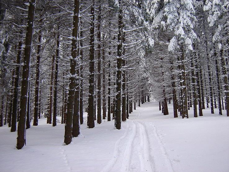 Snehovým lesom