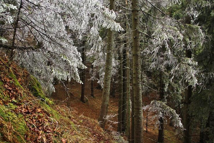 Zmrazený les