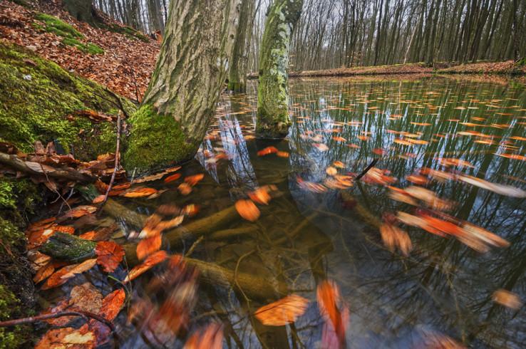 Lesné jazierko pri Planinke
