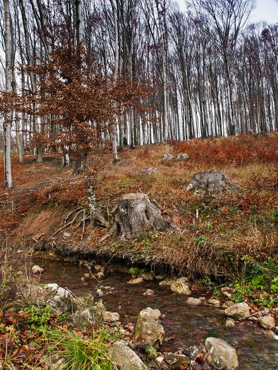 Rohožnícky potok