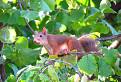 veverička na nákupe :-)