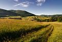 Vysoké trávy