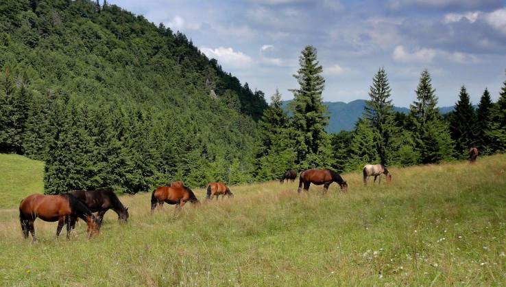 Kone pod Honzovským