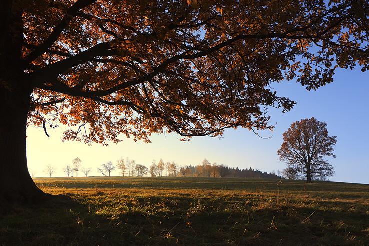 jedno ráno pod jedným dubom
