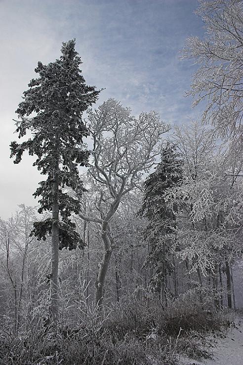 Na Nový rok 2007, cestou na Lajošku