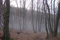 Tajomný les / 1.7000