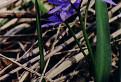 kvetinka a opeľovač / 1.3846