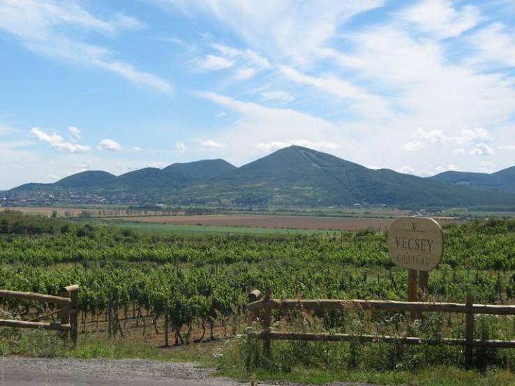 V tokajských viniciach