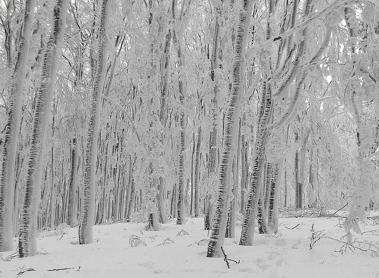 Namrznutý Inovec