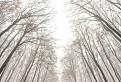 Tajomným lesom / 1.0000
