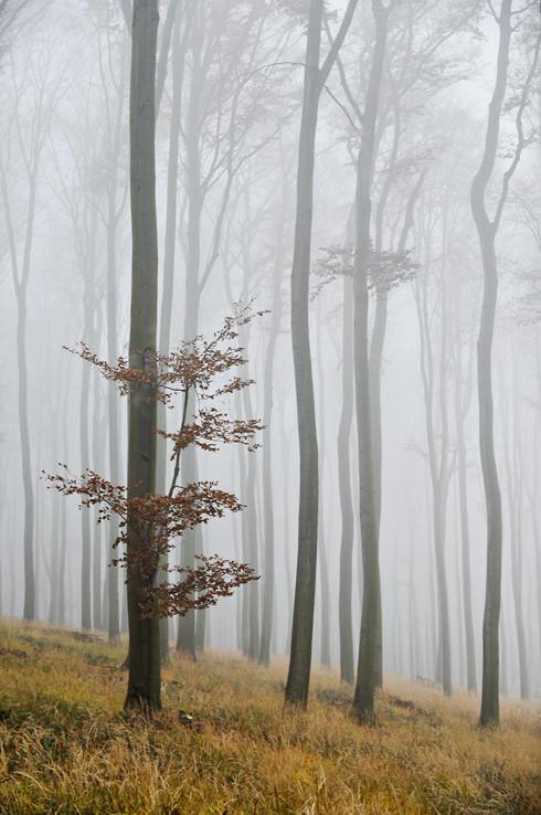 Tajomný les v Karpatoch I.