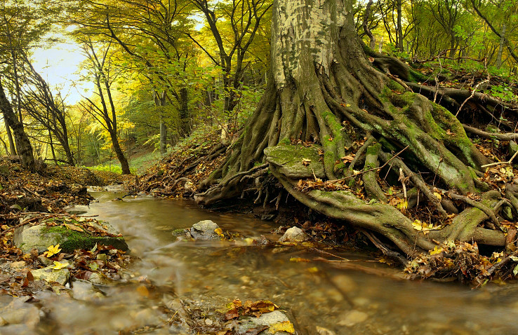 Rozglabský potok