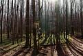 Stratený v lese
