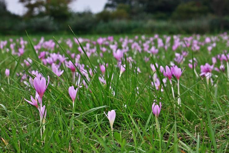 Kvetovaný koberec